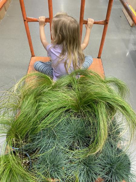 grasses for landscaping